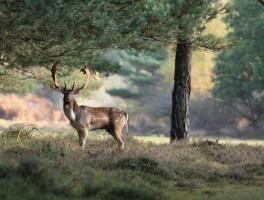 Wildlife Photography Workshop-1