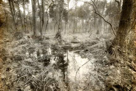 Wildlife and Landscape Photography Workshop